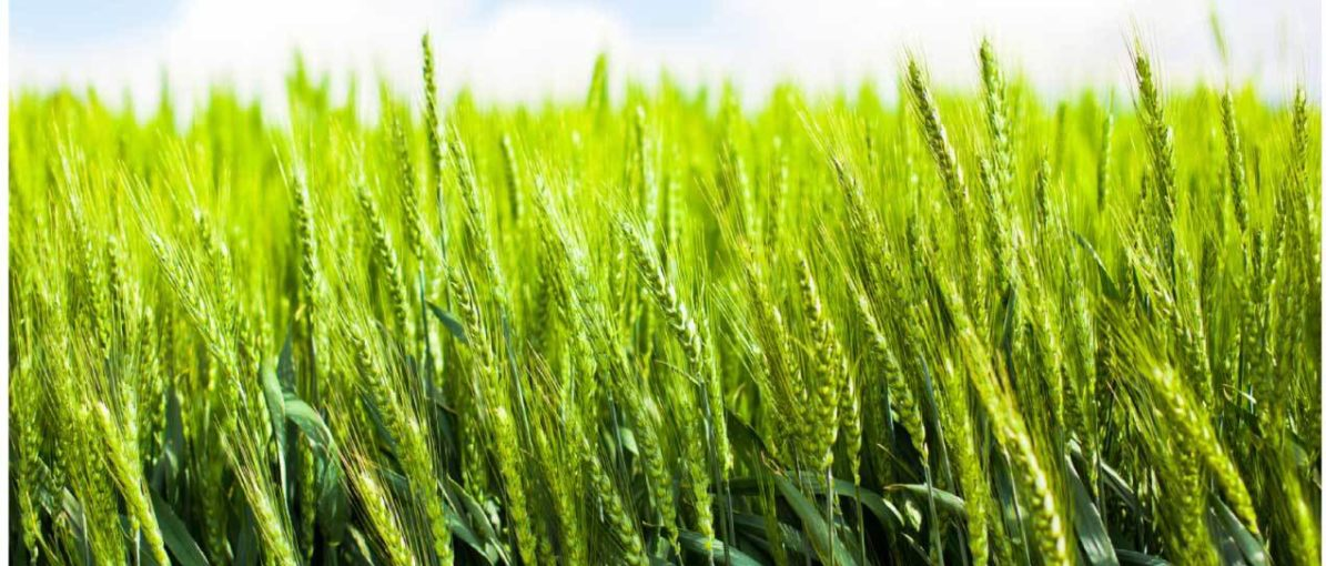 EDC supports innovative agriculture company